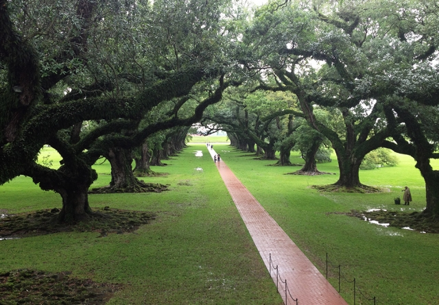 Oak Alley Plantation, Louisiana, much famed for its avenue of oak trees, image
