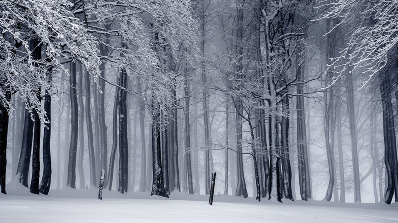 Woods on a snowy evening