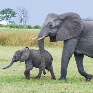 Rudyard Kipling, The Elephant's Child